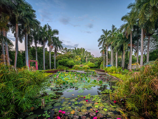 Jardín Botánico Culiacán. Colección de plantas acuáticas