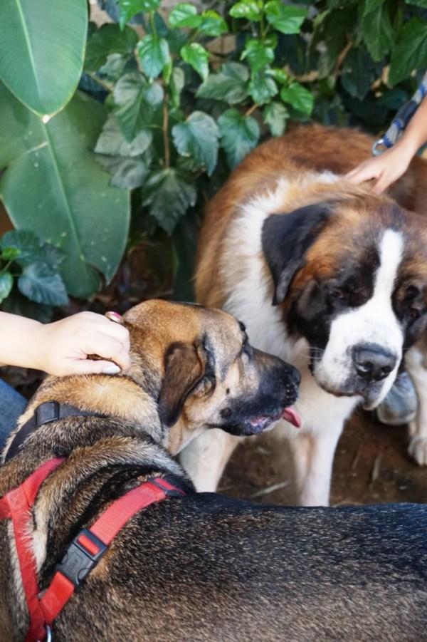 Bernie Lalit Ashok Dog