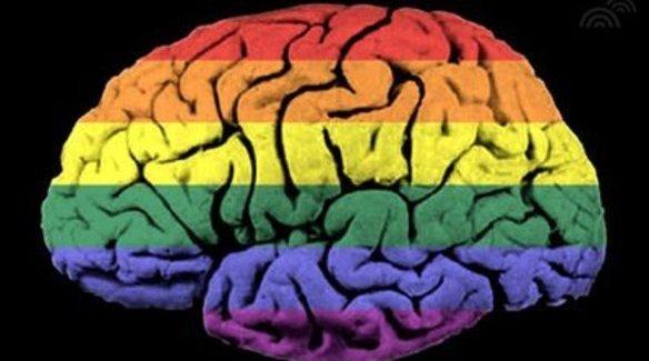 Cinsel işlevler, beyin ve eşcinsellik: Bir şeyleri fena halde yanlış anlıyor olabiliriz!