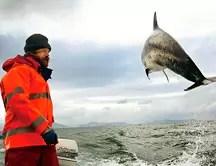 Delfines indican a pescadores dónde están los bancos de peces