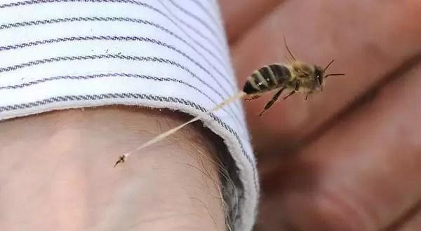 Foto: Así pica una abeja