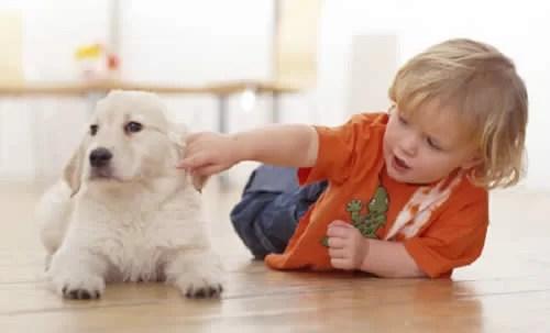 El efecto de las mascotas en los bebés