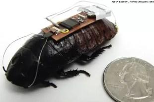 Cucarachas biónicas que salvan vidas humanas - Video
