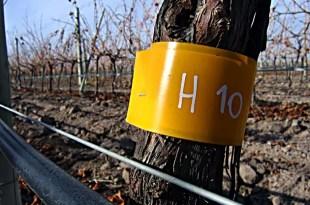 Proyectos que cambiarán el sabor del vino en el futuro