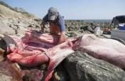 Fotos: Tiburón gigante en playas de EE.UU.