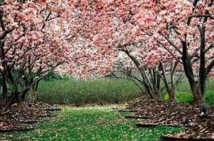 ¿Qué es la Triste Primavera? ¿A quiénes afecta?