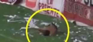 Video: Hincha cae de la tribuna y se perfora los pulmones