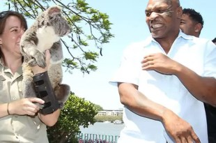 Mike Tyson y su fobia a los koalas - Video