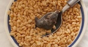 Encuentra ratón muerto en caja de cereales