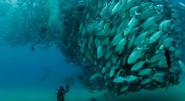 Video espectacular: Remolino de peces en el mar