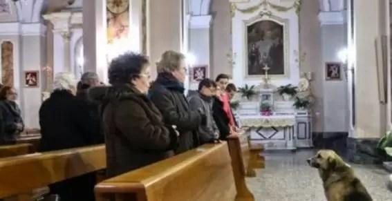 Perro asiste a misa en busca de su dueña fallecida