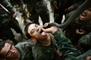 Videos y fotos impresionantes: beben sangre de cobra para sobrevivir