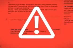 Video: polémica publicidad de Microsoft contra Google
