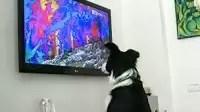 Un canal de TV sólo para perros
