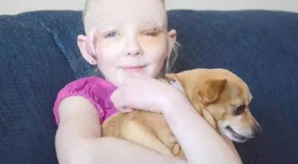 Chihuahua se enfrenta a Pitbull y salva a su pequeña dueña