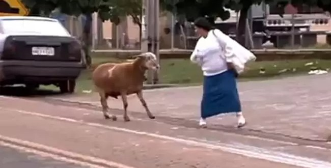 Video insólito: Cabra ataca a transeúntes