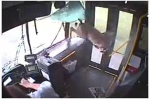 Video: Ciervo atravesó parabrisas de un micro y salió ileso