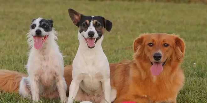 ¿Un año de perro equivale a siete años humanos?