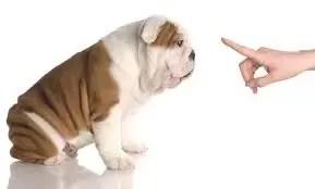 Qué tener en cuenta al adiestrar a un perro