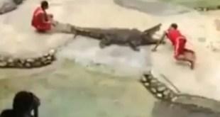 Video: Cocodrilo come la cabeza de su domador
