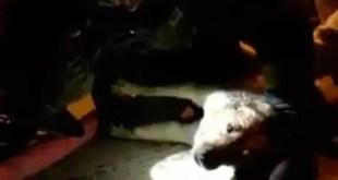 Video: Bombero salva a perro con respiración boca a boca