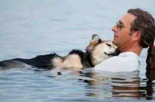 Murió el perro protagonista de la foto más conmovedora del mundo