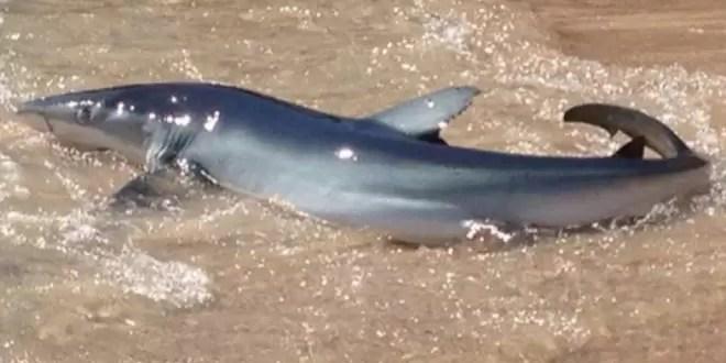 Video: pescó y se enfrentó a un tiburón en la playa