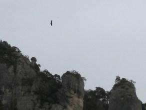 La scarpata degli avvoltoi, Cevenne