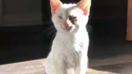 Beemer the Cat (Nikki Neumann)