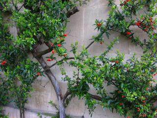Plants on wall in Wadham College