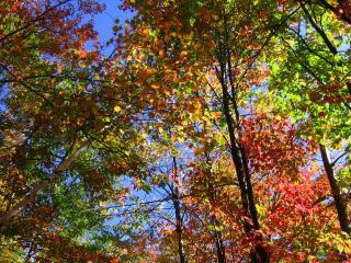 Gatineau Park foliage