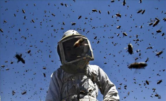 Un informe presentado por Greenpeace destacó que una tercera parte de la alimentación mundial y de la flora silvestre depende de los insectos polinizadores. Foto: EFE