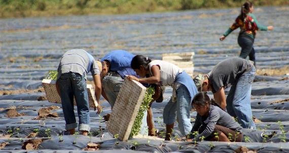 Muchos trabajadores agrícolas se quedan esencialmente atrapados por meses en campamentos infestados de ratas. Foto: Cuartoscuro.