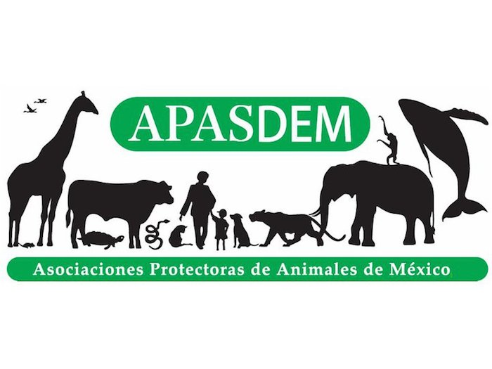 Apasdem afilia grupos activistas que cumplan con ciertos requisitos para unificar a los grupos protectores de animales. Imagen: Apasdem.