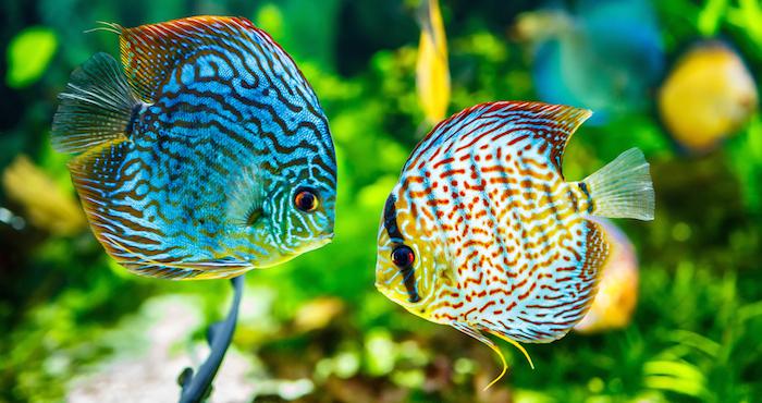 Resultado de imagen para peces