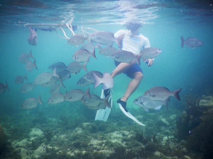 Cada año se registran en el Área Natural Protegida (ANP) Parque Marino Nacional Costa Occidental de Isla Mujeres, Punta Cancún, Punta Nizuc, alrededor de 600 mil visitantes, cifra que coloca esta área en primer lugar al recibir el mayor número de turistas. Por eso es una zona tan codiciada. Cuenta con 8 mil hectáreas y el nombre tan largo que posee se debe a que los arrecifes de coral no se localizan por todas partes y la mayoría de las unidades arrecifales se encuentran dentro de los tres polígonos que están incluidos. Al ser una de las áreas protegidas más consolidadas en su proyecto de conservación, los colaboradores de la Comisión Nacional de Áreas Naturales Protegidas (Conanp) se encargan de la operación y mantenimiento. Pero eso podría ser cosa del pasado. Foto: Cuartoscuro