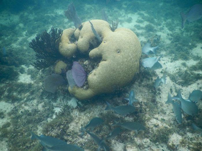 Punta Nizuc, como parte de Cancún, posee la segunda barrera de coral más grande del mundo y ha permitido establecer allí diferentes parques preservadores del recurso natural, que ahora están en peligro. Las aguas son poco profundas, cálidas y cristalinas; además en ellas abundan una gran variedad de especies marinas los cuales hacen de este lugar un sitio espectacular. El Arrecife Mesoamericano tiene para ofrecer gran variedad de especies marinas y un avistamiento inigualable. Foto: Cuartoscuro