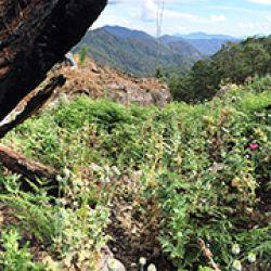 Campo de amapolas en la Sierra de Guerrero, primer lugar productor de heroína en América y una de las regiones más pobres del continente