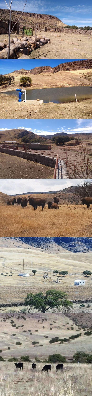 De acuerdo con el ahora exgobernador Javier Corral, en los cuatro ranchos en Balleza, Chihuahua, había animales exóticos y 450 cabezas de ganado de exportación.