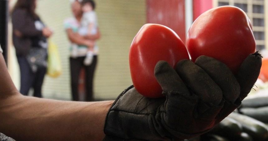 """jitomate amparo - La revisión aduanal del 100% al tomate mexicano es """"necedad"""" de Florida, denuncian productores"""