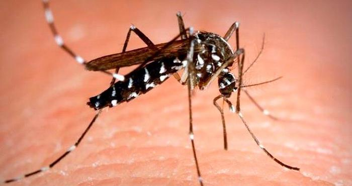 mosquito tigre - Los mosquitos han matado más que cualquier enfermedad en la historia de la humanidad: científicos