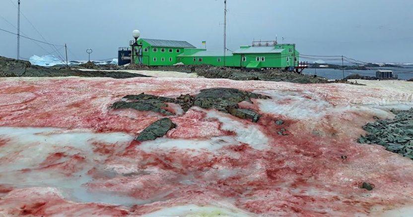 87167583 3335109009848987 5761803102663475200 o - La Antártida y Groenlandia pierden hielo 6 veces más rápido que en los 90, concluyen científicos polares - #Noticias