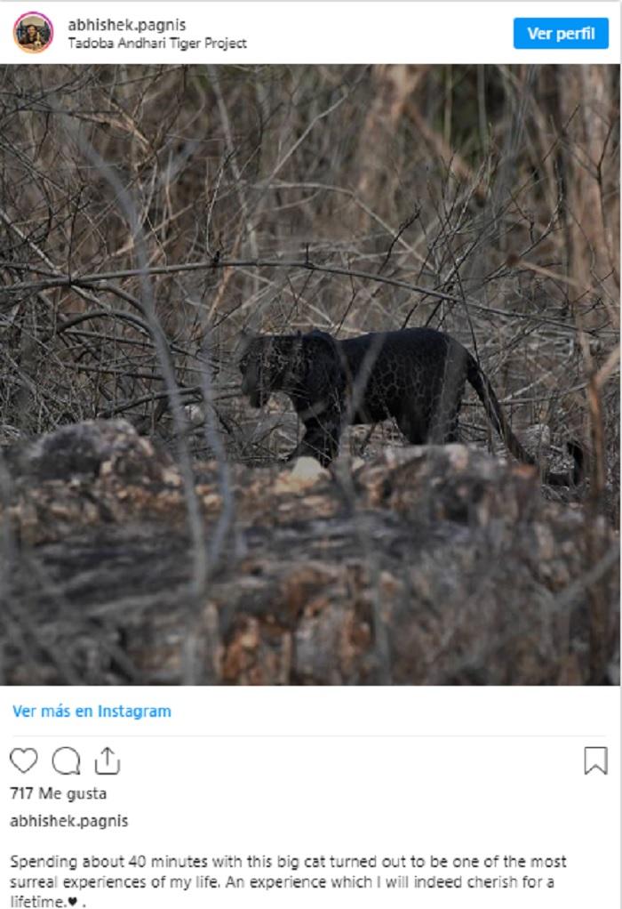 """leopardo negro - FOTO: Joven vive experiencia """"surreal"""" en la India: se encuentra con leopardo negro a sólo unos metros"""