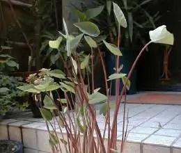 garden-23