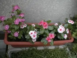 garden-24