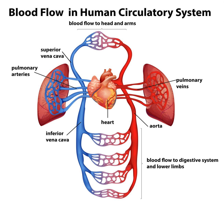 Narrow Blocked Artery Surgery Treatment Singapore Safe Fast