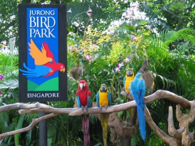 Enjoy-some-Bird-watching