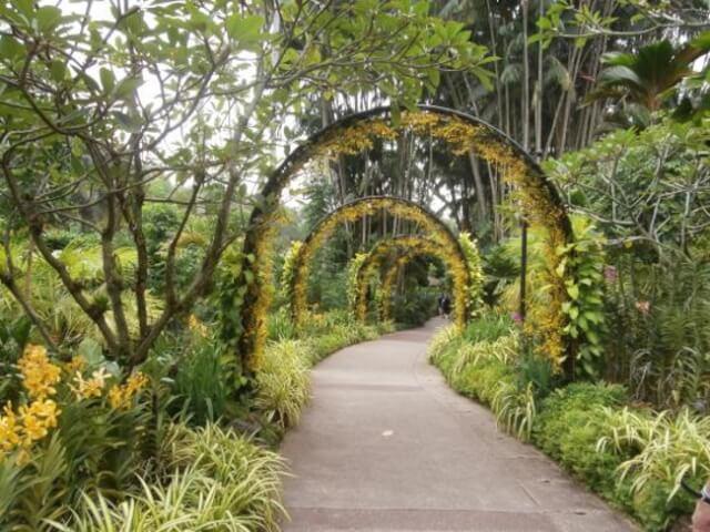 Stroll-around-Singapore-Botanic-Gardens-