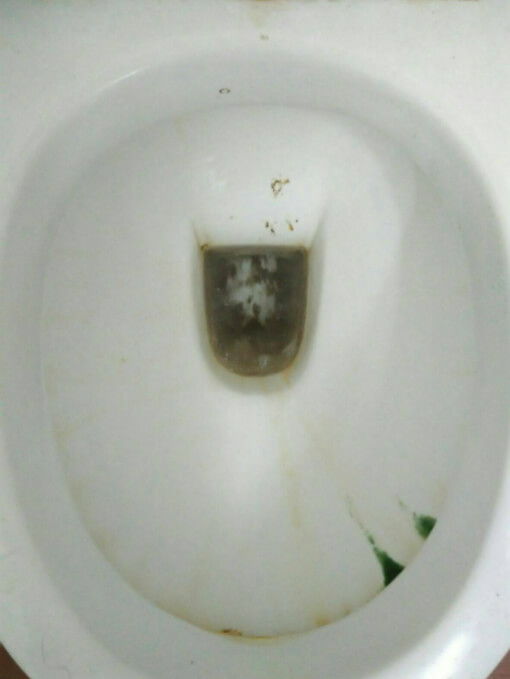 How To Maintain Your Toilet Bowls Singapore Toilet Plumber