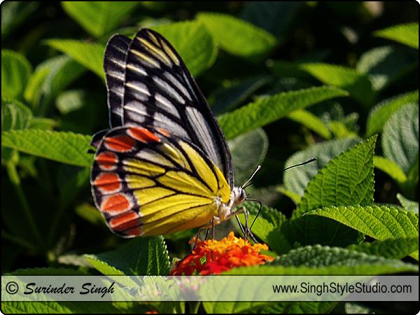 Butterflies  Photography
